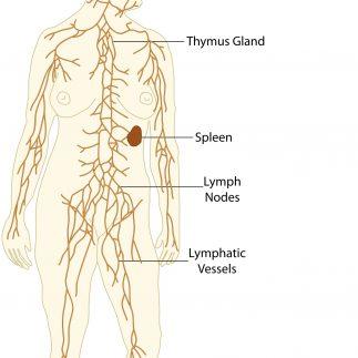 drenaje linfático Lymphatic drainage